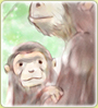 animal's family ape